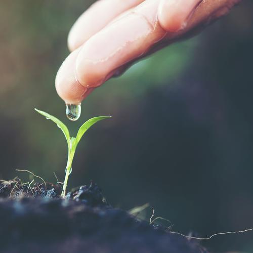 Planting-one-hundred-trees-kallangur
