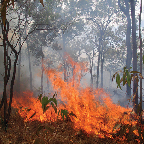 HAZARD-REDUCTION-BURN-MORETON-BAY